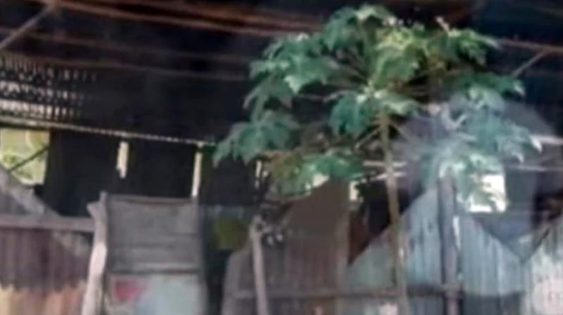 Sedih, 2 Keluarga Miskin di Kota Kupang Tinggal di Kandang Ayam