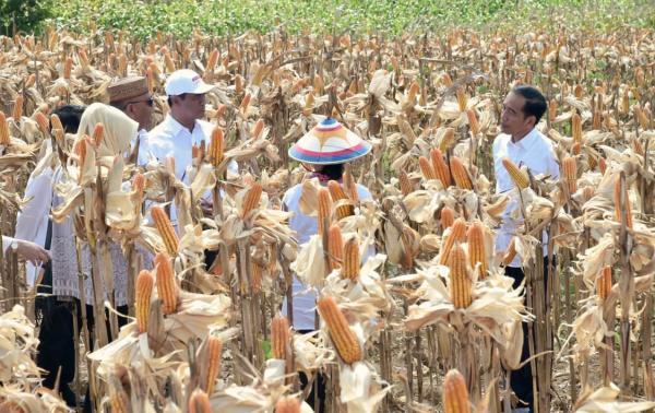 Jokowi: Sektor Pertanian Sumbang Pertumbuhan Ekonomi Nasional di Tengah Pandemi