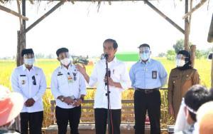 Kunker ke Indramayu, Jokowi: Kita Stop Impor Beras hingga Juni